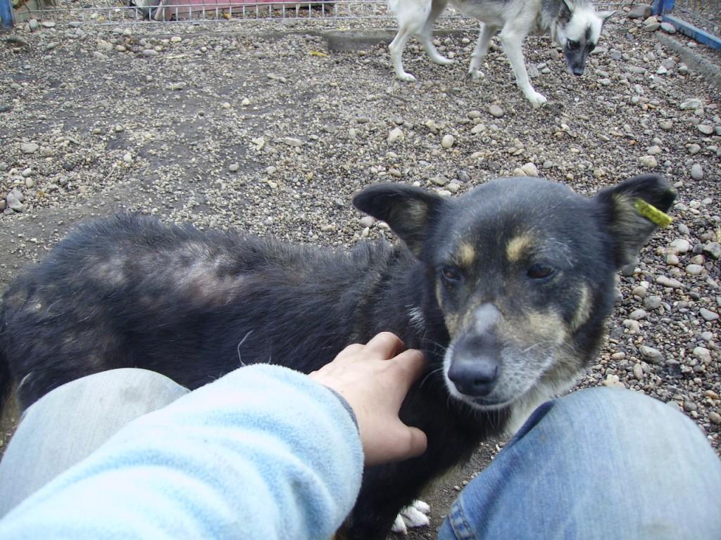 En hund som fått trygghet i hägnet och har pälsen på återväxt.
