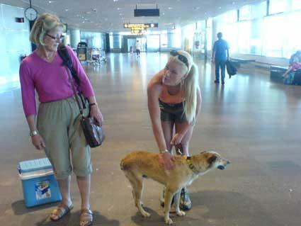 Romrom å morsan tyckte att jag såg ut som en gullig rävunge. Men tji fick dom för jag är en liten dingo.