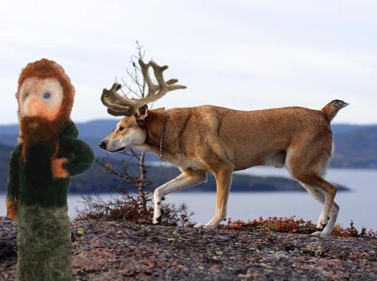 Vem som helst, till och med en enögd, ser ju att jag är mer släkt med en hyena eller en dingo eller nåt.