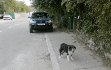 En så kallad kvartersvakt i Cernavoda som skäller ut mig när jag passerar på promenad med Lilis boxer Bella.