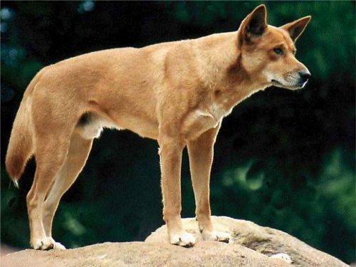 Om det inte vore för att jag vet att min farsa är en tönt så skulle det ligga ganska nära till hands att tro att den här Dingon skulle vara min riktiga farsa.