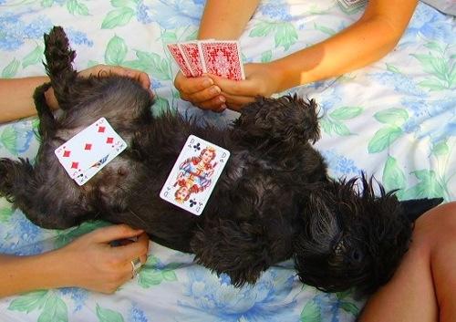 ...fast hon hade oanada talanger också. Hon lärde mig också spela poker. Många gånger spelade vi om disken eller ett grisöra - jag vann alltid!