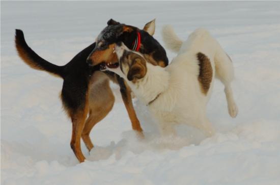 Alltid lika najs att se när någon kan plocka en poäng på Cobran i chase-and-swing-neck-wrestling.