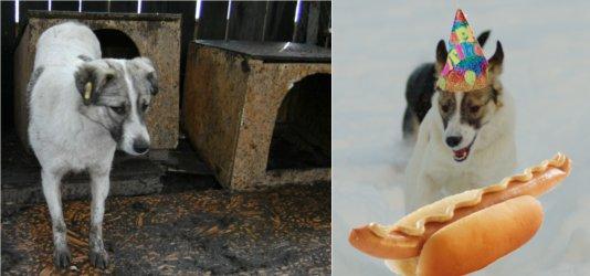 Bilden till vänster är Java-Snava för ett år sedan. Party? Nja, svensk varmkorv smakar så mycket bättre än rumänsk lera.