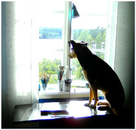 Cobran satt i fönstret vid lunchtid och gjorde strategiska beräkningar inför Mister Thunders kommande utbrott.