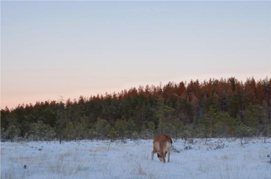 Min sköna savann bakom dass där jag brukar äta hjortron är utbytt mot en sibirisk stäpp.