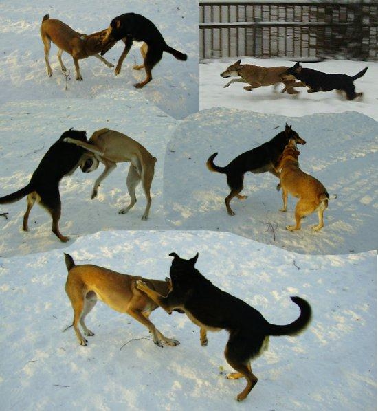 Exempel på nödvändig exercis för blivande Gula Hundar.