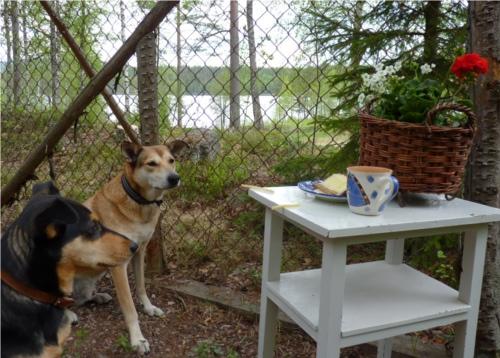 Vi gör halva dagar i hundgården och där har jag öppnat café i en hörna, vi måste ju käka tillsammans liksom