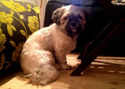 Lilla Benets morsa skrev direkt under på att vi borde behålla en så söt och snäll hund som substitut för Lilla Benet. Som tur var kom ägaren och hämtade hunden dagen därpå så frågan aktualiserades aldrig.