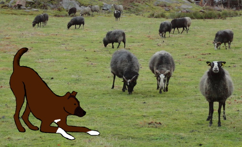 Ska kalven få egna får liksom bara sådär asså. Det är typ fett tjallo, jag har alltid velat ha ett eget husdjur utöver morso.