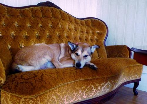 Jag erkänner lätt att jag föredrar nyproduktion. En Gul dågg i en Gul soffa i ett Gult hus - det ni!