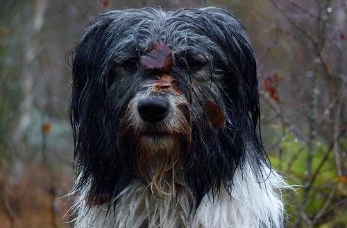 Jag gillar inte lort och snusk men lite krädd kan rumänskan i Rättvik få för att hon sket i sin morsas order om att absolut inte bada i dy. Det måste finnas gränser för inställsamheten.