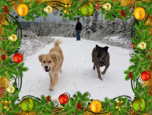 Uschu fick en Transsylvansk syster av Gorillan i julklapp. Hon är ett drygskåp med talang för att dra fula gubbar i byxbenet.