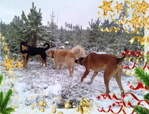 """Cobran tog sig en egen julklapp i form av titeln """"lok"""" i det Rumänska Rövtåget från Rämmen. Att vara lok klär verkligen Kallands drakfröken No. 1 Styggo-Snyggo."""