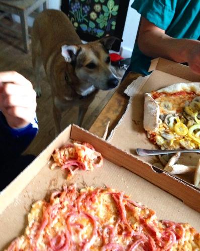 Midsommardagen bjöd på traditionell pizza, det är en av få dagar på året som mina kroniska hungersmärtor upphör för en kort stund.