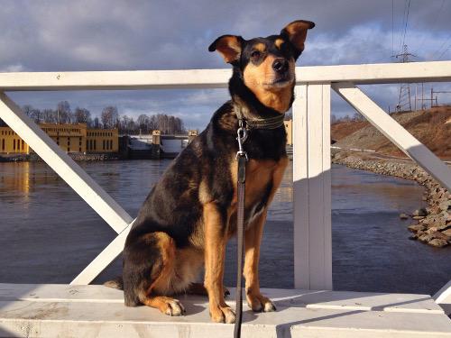En rumänsk gatuhund kan ha nio års livserfarenhet men fortfarande se ut som ett nio månaders drygskåp. Matcha det valpen!