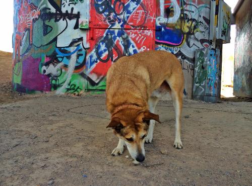 Jag har strukit runt som en city-dingo.
