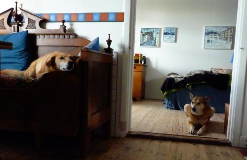 Du och jag brorso. I nästa liv ska vi fanimej bo ihop hela tiden och du ska ha fyra ben å jag ska ha två ögon.